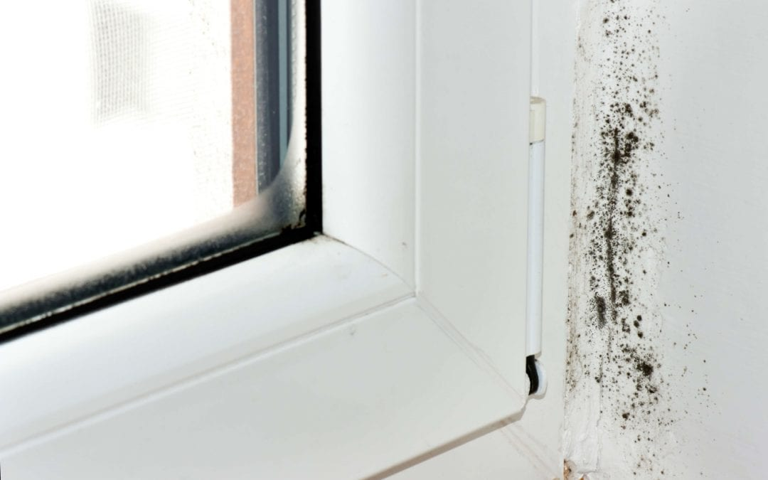 Ways to Prevent Mold Growth in the Home